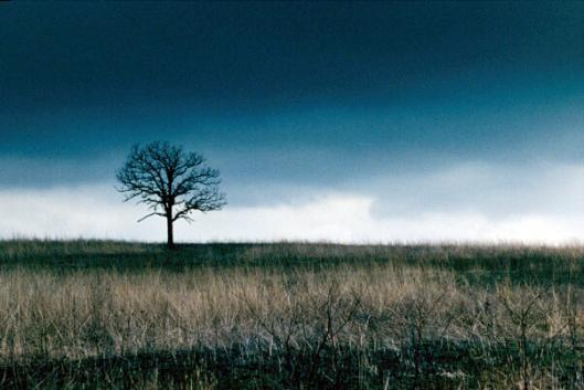 Tree Against Storm - zero draft