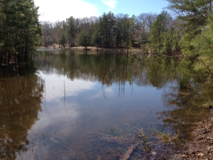 Campground Pond #2