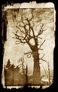 VDB Tree